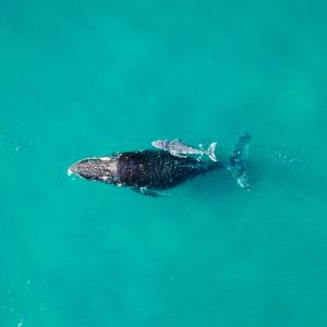 Whale watching weekend Port Macquarie